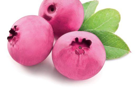 Šilauogė (Vaccinium corymbosum) 'Pink Lemonade'